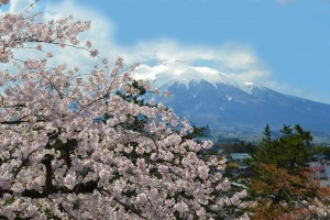 cherry blossom and mountain japan