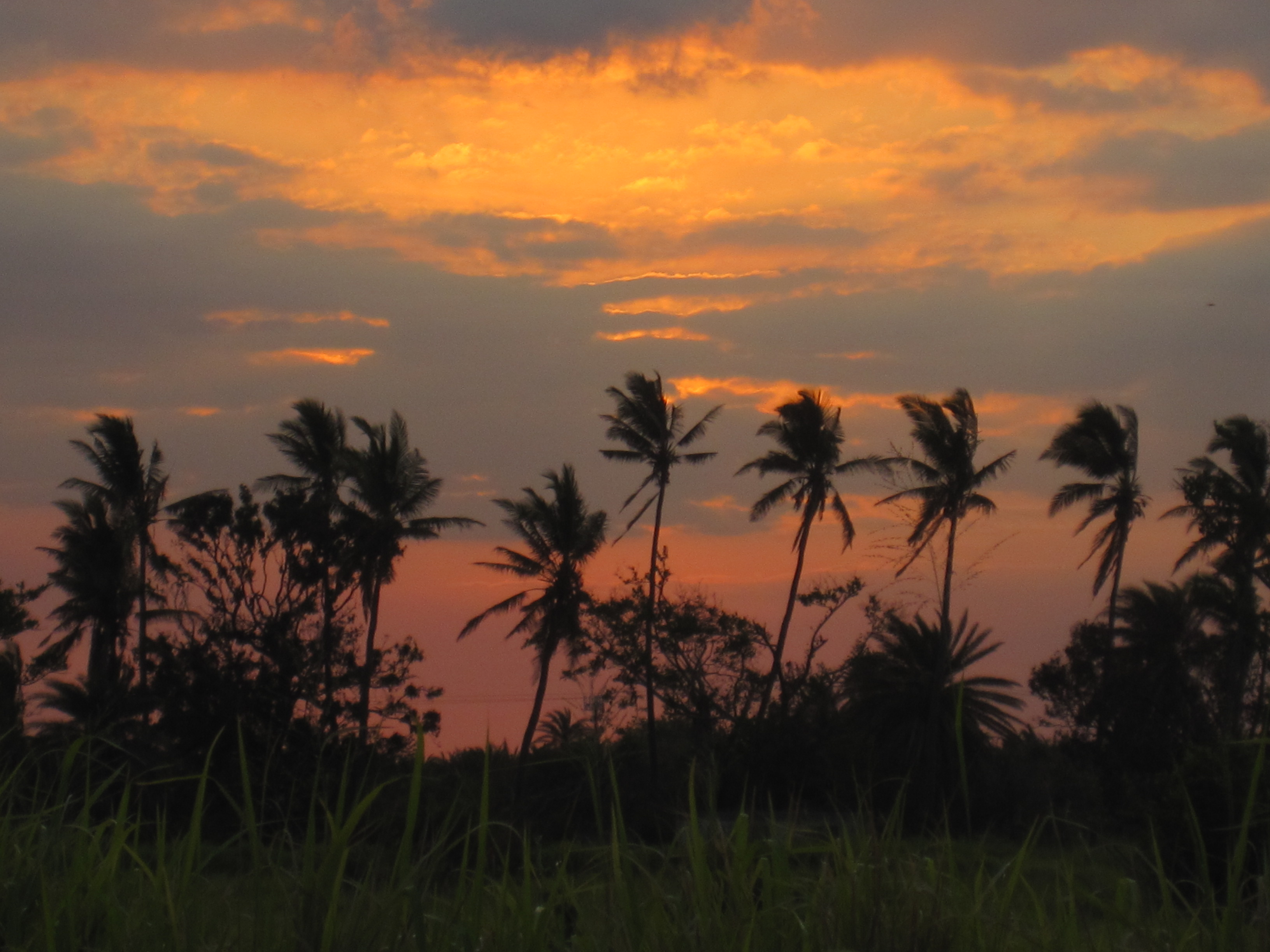 sunset palmtrees fiji