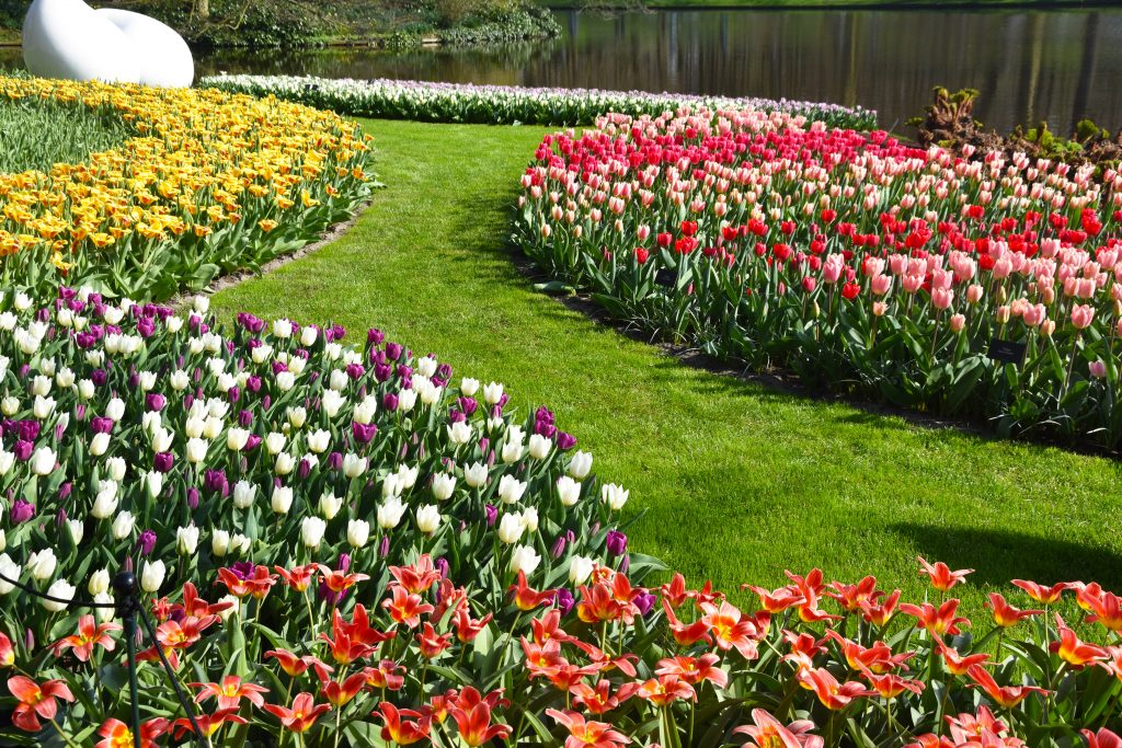 Keukenhof The World S Largest Flower Gardens Anne Travel